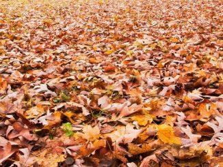 Осень на дворе… и во дворе