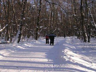 Битцевский парк зимой становится еще загадочнее.